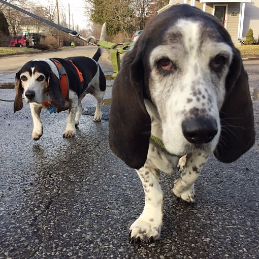 Daisy and Birdie walking on wet pavement, with faces close to the camera.