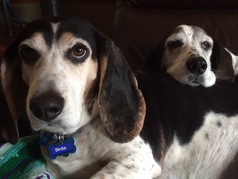 When adopting a dog you should consider personality. Daisy and Birdie have the the perfect personalities for us!