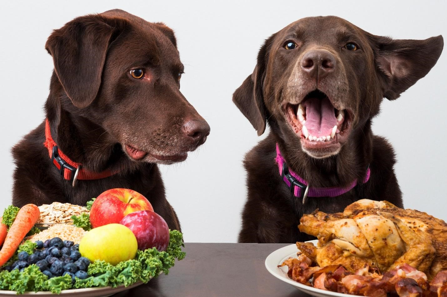 how to help your dog lose weight - pawslikeme pet talk blog